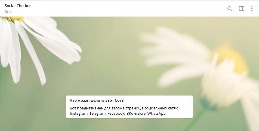 Socialchecker.ru - бот для взлома ВК в Телеграм или развод?